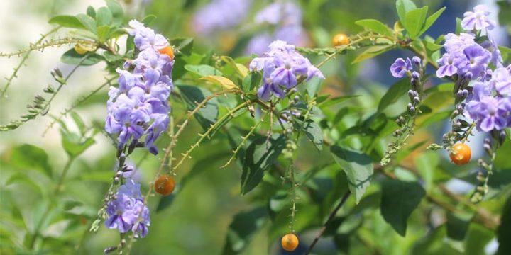 ดอกไม้ปลูกง่ายได้จากที่บ้านใช้งานได้ง่ายหลายสถานการณ์